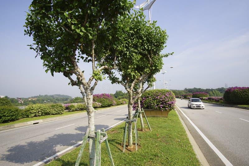 美好的绿色风景在布城马来西亚 免版税库存图片