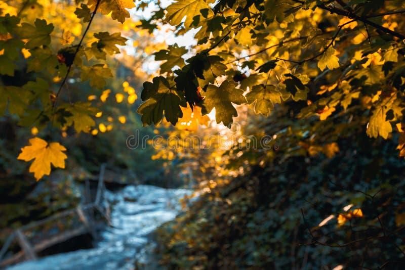 美好的黄色离开反对山小河和明亮的太阳的背景 免版税图库摄影