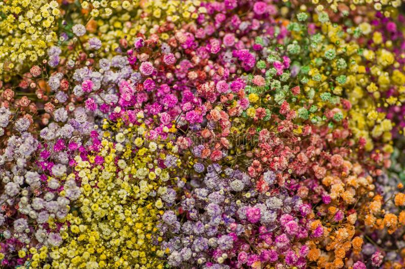 美好矮小五颜六色花开花有用为插花 免版税库存照片