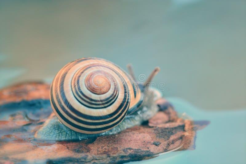 美好蜗牛漂浮 库存照片