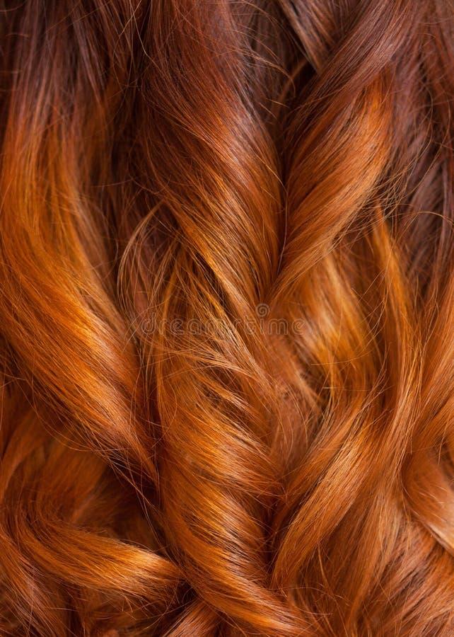美好,健康,长,卷曲,红色头发关闭 用烫发钳创造卷毛 免版税库存照片