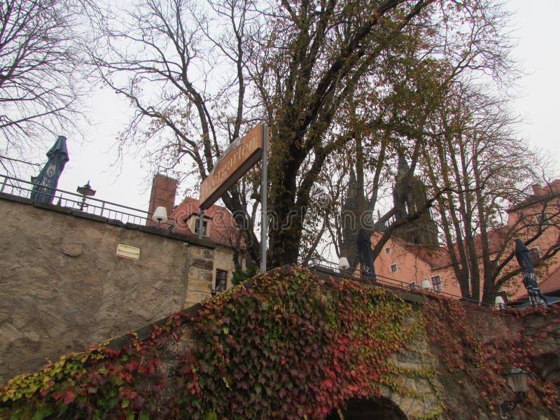 美妙地在城市墙壁上的美丽的上升的植物在曲拱上 库存图片