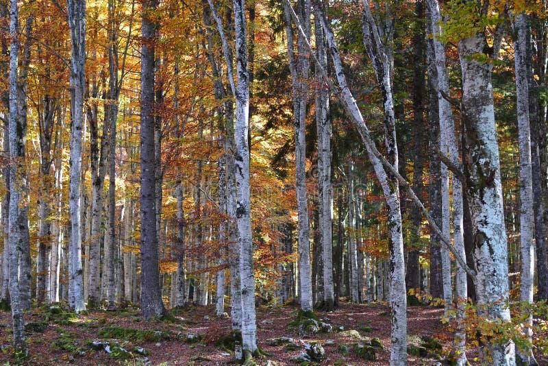 美妙的世界在有秋天的明亮的颜色的森林里 免版税图库摄影