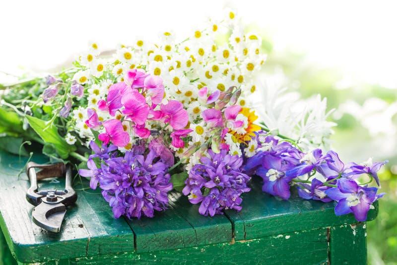 美妙的五颜六色的花特写镜头在夏天庭院里 免版税库存图片