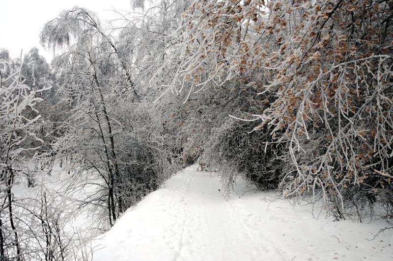 美妙的冬天2011年在冰冷的雨以后的莫斯科 库存照片