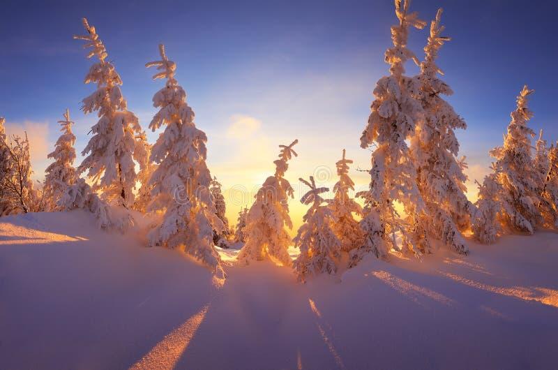 美妙的森林冬天 免版税库存照片