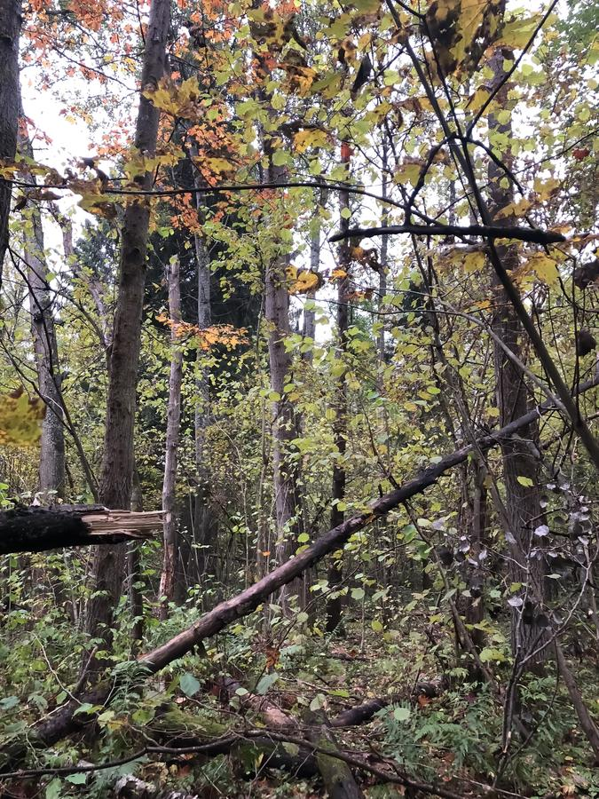 美妙的森林在秋天 免版税库存图片