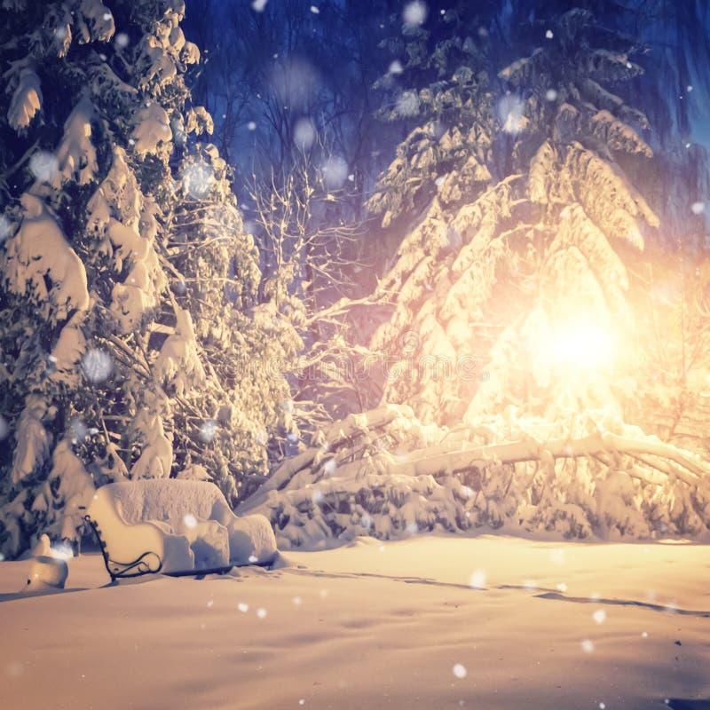 美妙的横向 发光由光的积雪的树 美妙背景的冬天 在落的雪下的夜公园 异常的微量 免版税库存图片