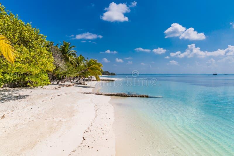 美妙的海滩场面,软的波浪,在被弄脏的背景的棕榈树蓝色海视图 库存照片