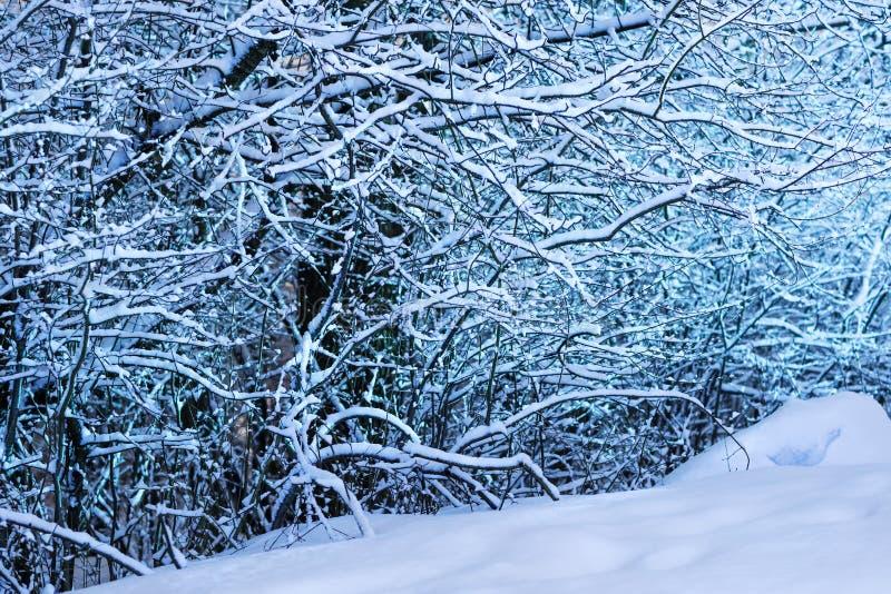 美妙的白色森林在冬天 冬天风景风景 免版税库存图片