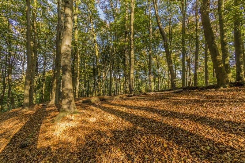 美妙的秋天天在森林里 库存图片