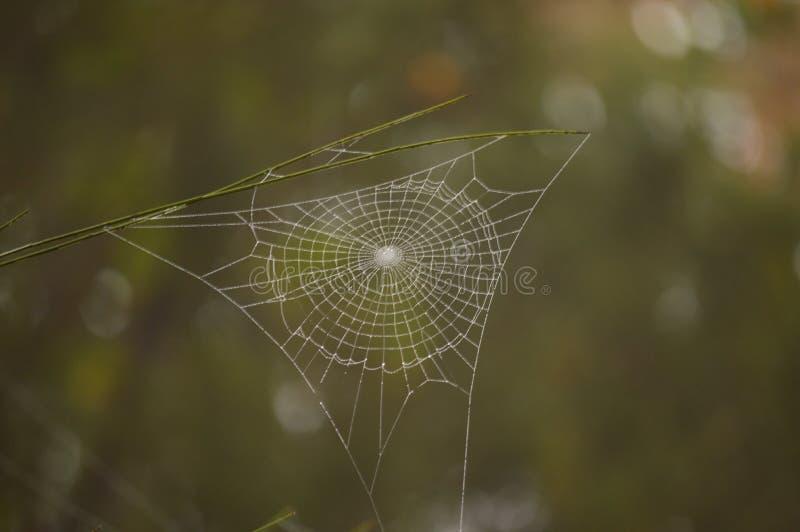 美妙的蜘蛛网在Medulas古老罗马金矿在与很多雾的一天在Medulas 自然,旅行,风景,他的 免版税库存图片