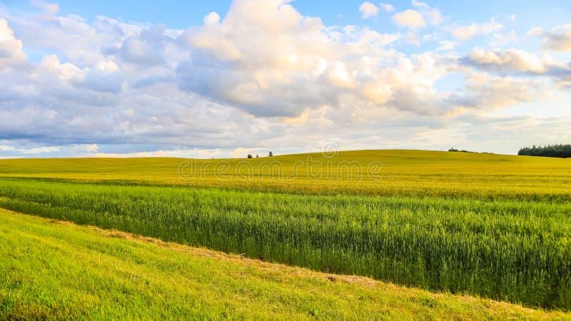 美妙的领域、小山、树和天空蔚蓝与云彩在乡下 E 免版税库存照片