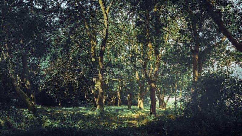 美妙的风景森林风景在夏天 自然五颜六色的自然美人的概念  孑然,享受看法,休息 图库摄影