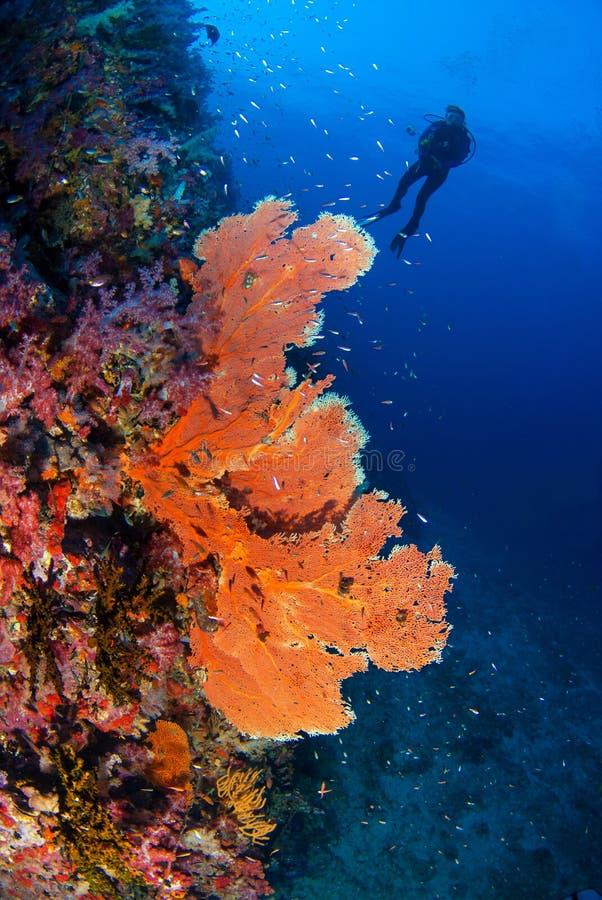 美妙的水下的世界 库存图片