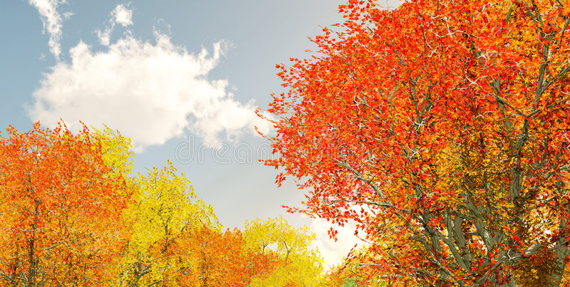美妙秋天的风景 库存照片