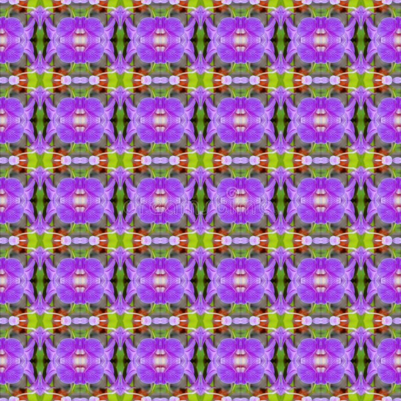 美妙紫色兰花,花花束在充分的bl 库存例证
