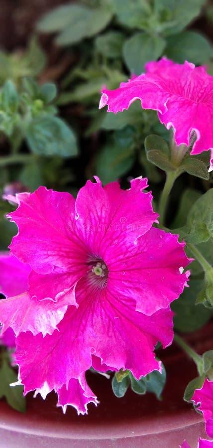 美妙Beautifulflower自然图象可爱的花 库存照片
