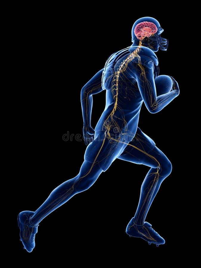 美式足球球员的神经系统 向量例证