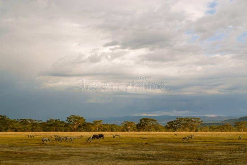 美术的非洲风景(肯尼亚)与野生生物 免版税图库摄影