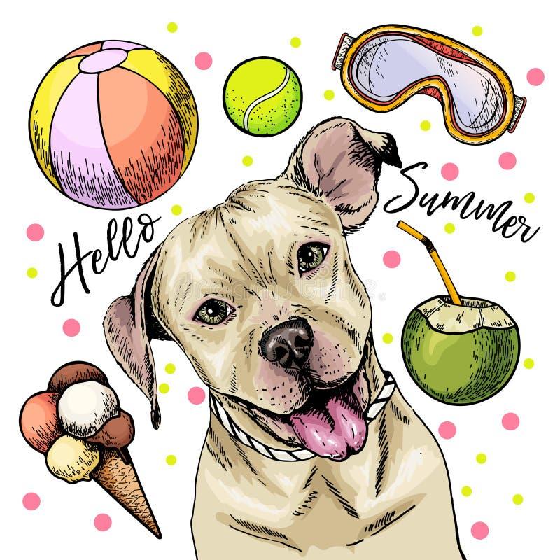 美洲叭喇狗狗传染媒介画象  你好夏天动画片例证 椰子鸡尾酒,球,冰淇淋手 向量例证