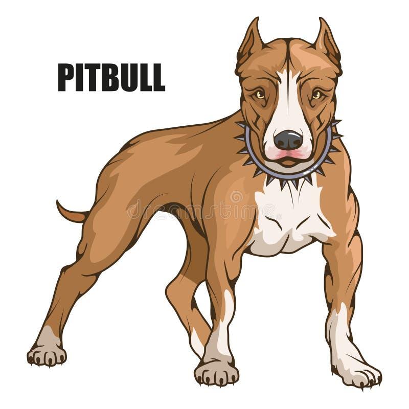 美洲叭喇狗,美国美洲叭喇,宠物商标,狗pitbull,上色了设计的,彩色插图宠物适当作为商标或 皇族释放例证