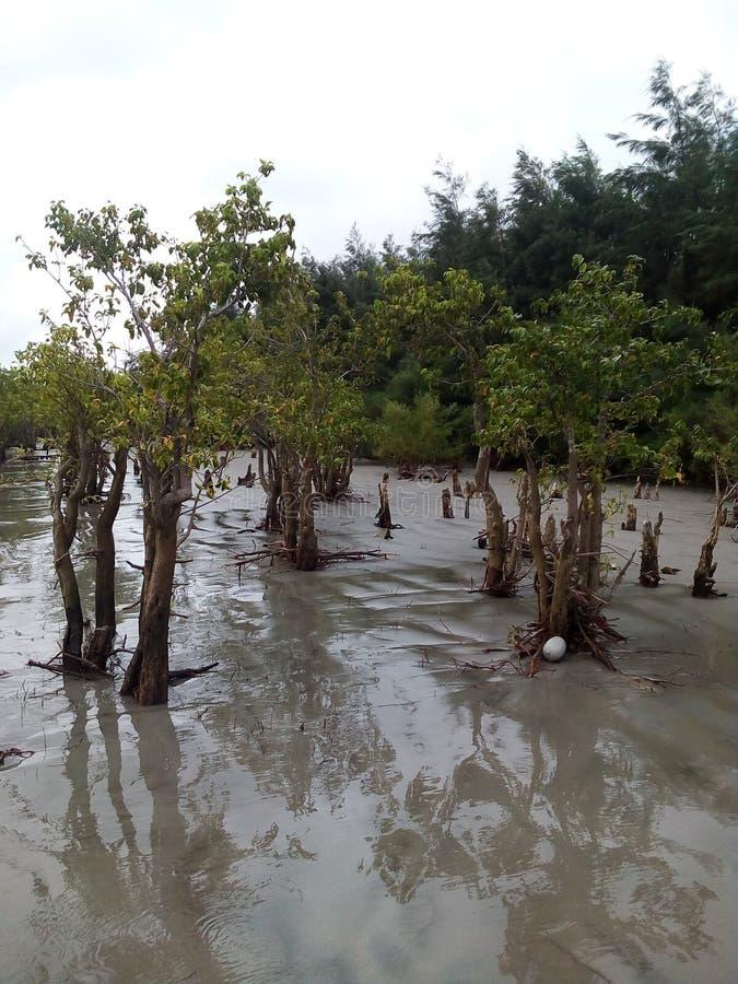 美洲红树海海滩 免版税库存照片