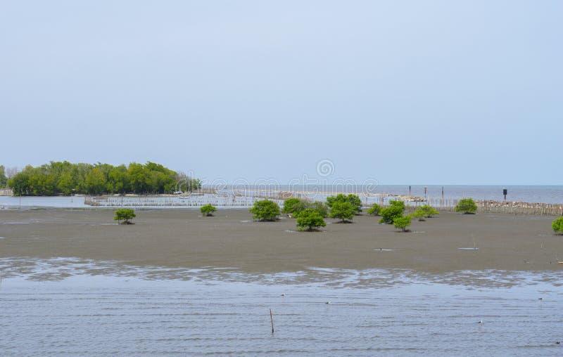 美洲红树海看法有一些的美洲红树树和分支海岸侵蚀保护的 库存照片