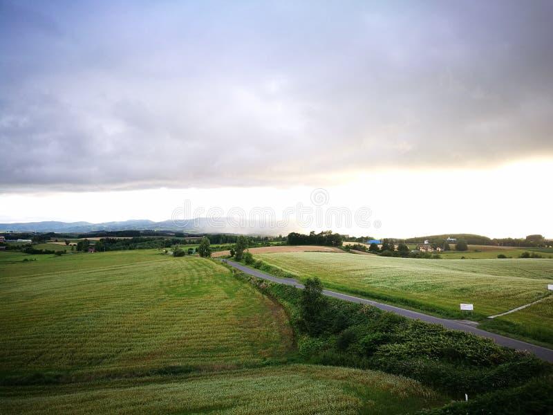 美瑛町镇美好的风景看法在夏天 免版税图库摄影