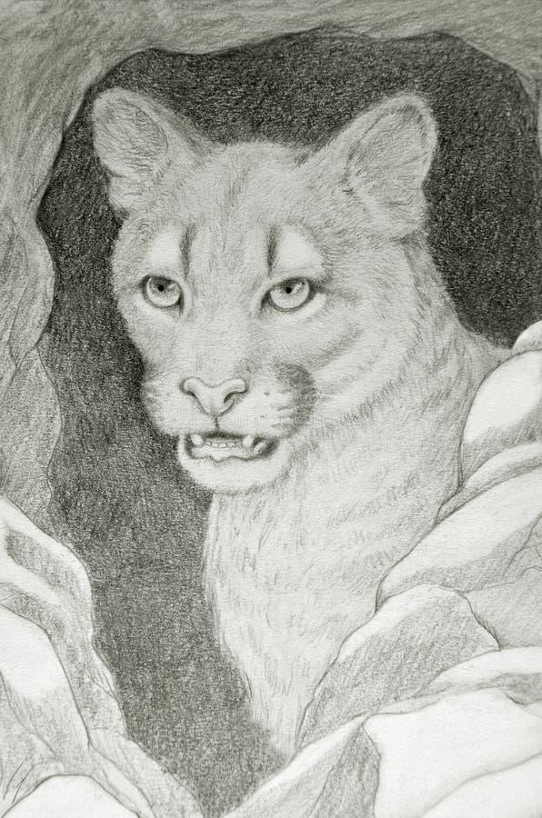 美洲狮面孔画象 库存例证
