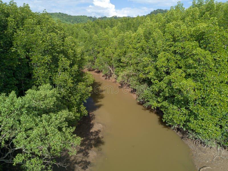 美洲红树树森林和河鸟瞰图Ranong的, Thailan 免版税库存图片