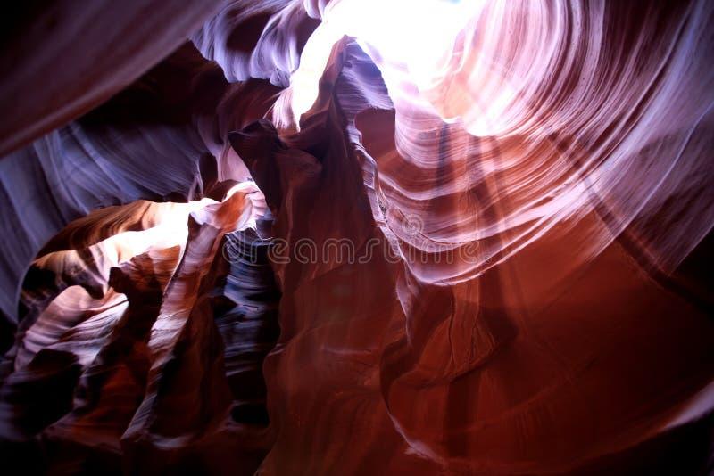 羚羊亚利桑那峡谷美国 免版税图库摄影