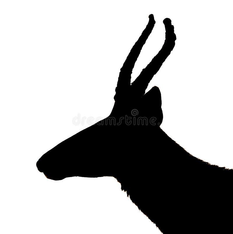 羚羊在白色的剪影黑色 库存照片