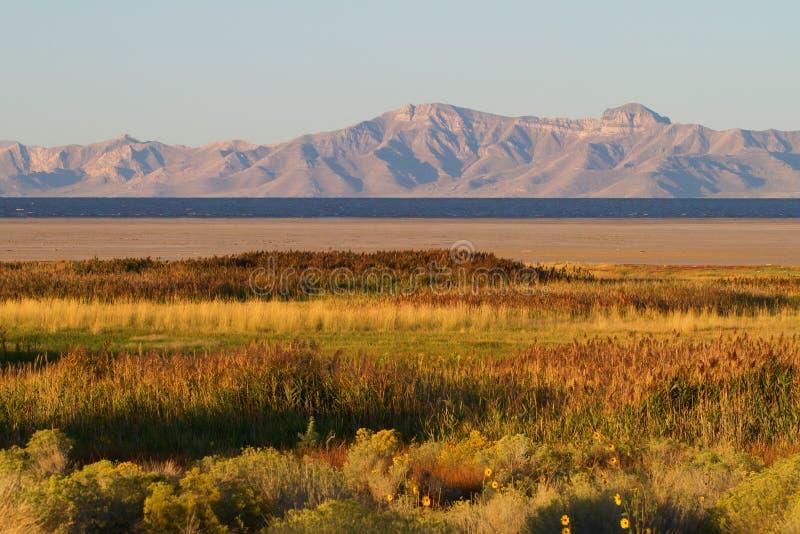 羚羊海岛和Wasatch山 免版税库存照片