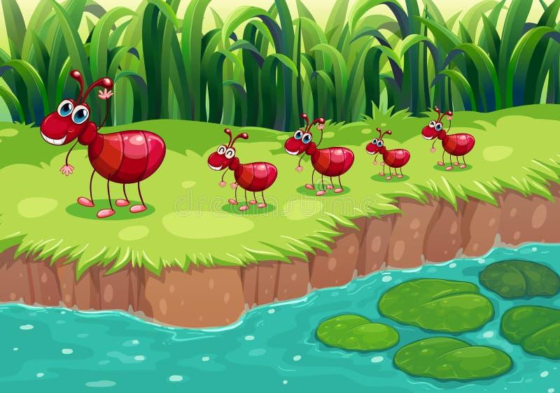 群在河岸的红色蚂蚁 库存例证