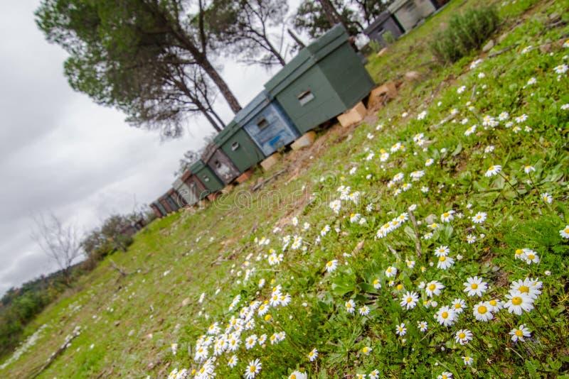 群收集了蜂蜜多只蜂 库存图片