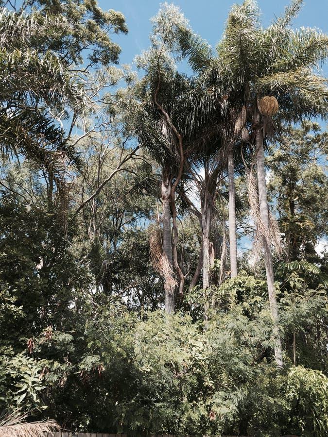 群棕榈 免版税库存图片