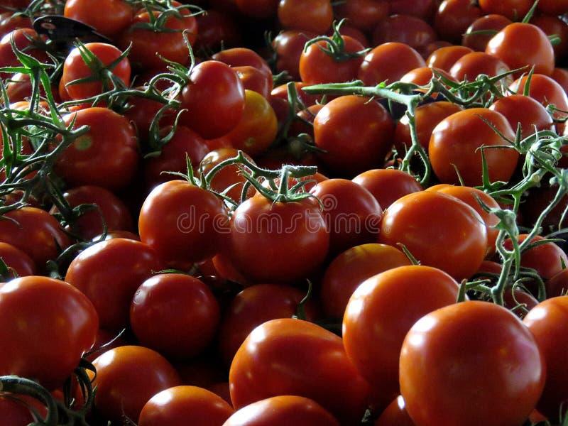 群蕃茄 免版税图库摄影
