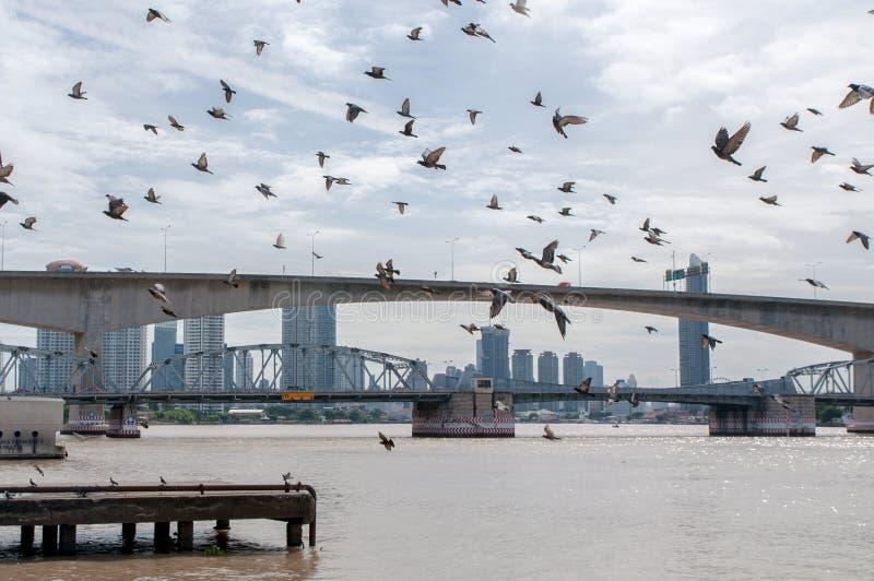 群鸟飞行 免版税库存照片