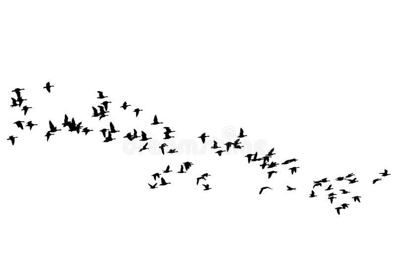 群鸭子一 向量例证