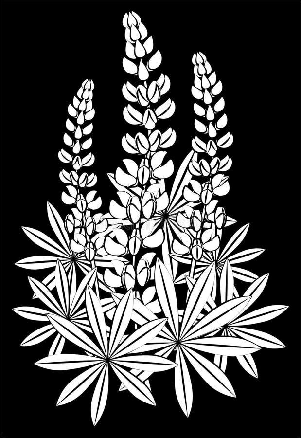 羽扇豆开花  向量例证