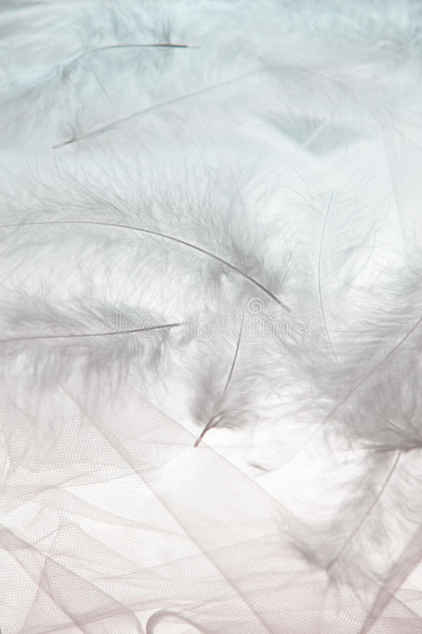 羽毛和薄纱 免版税图库摄影