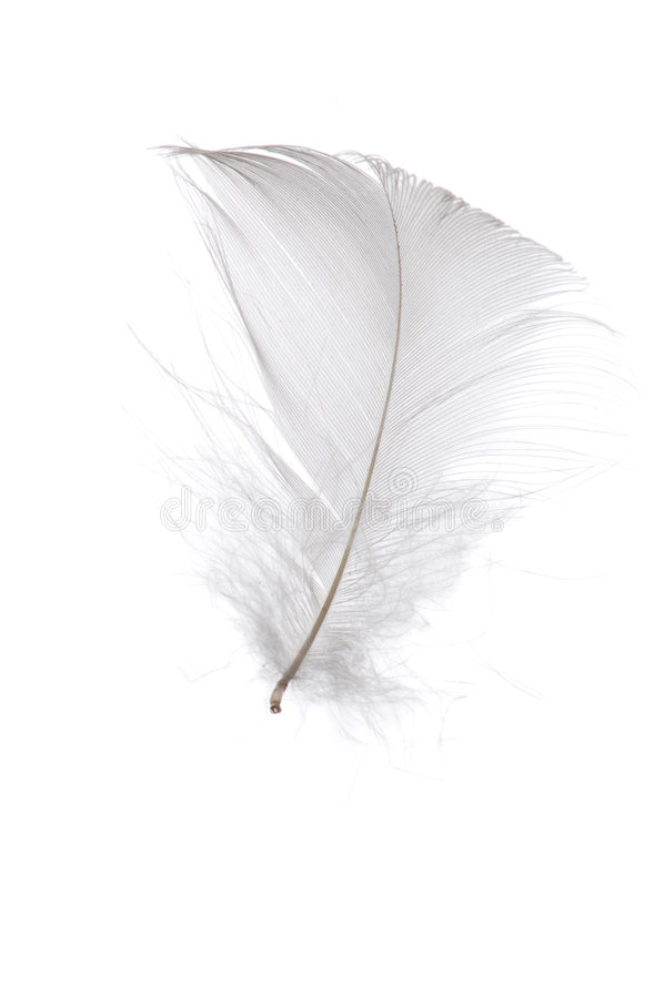 羽毛唯一白色 图库摄影