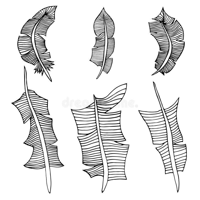 Download 羽毛在集白色的查出的对象 向量例证. 插画 包括有 双翼飞机, 图象, 老鹰, 典雅, 抽象, 图标, 高雅 - 59103049