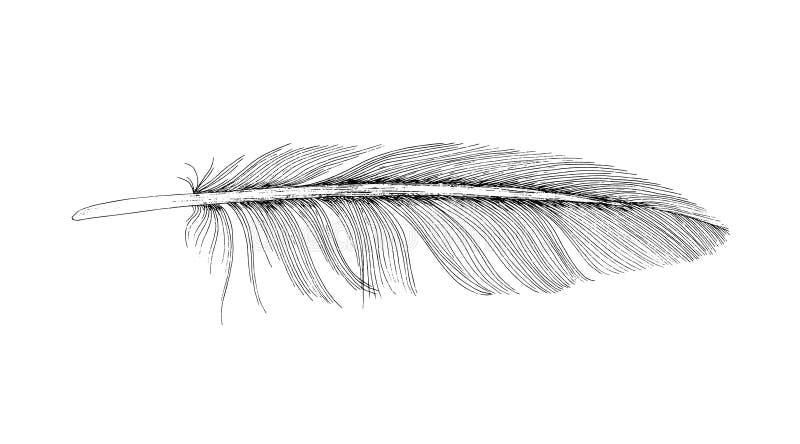 羽毛墨水剪影 背景查出的白色 向量例证