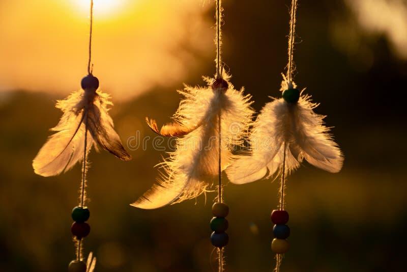 羽毛捉住梦想和愿望在平衡的太阳的光芒 图库摄影