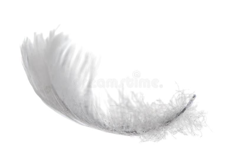 羽毛查出的天鹅 免版税库存照片