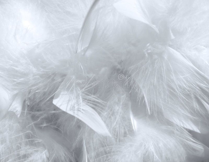 羽毛模式 库存照片