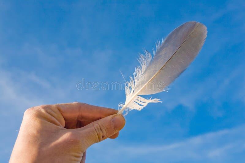 羽毛海鸥 库存图片