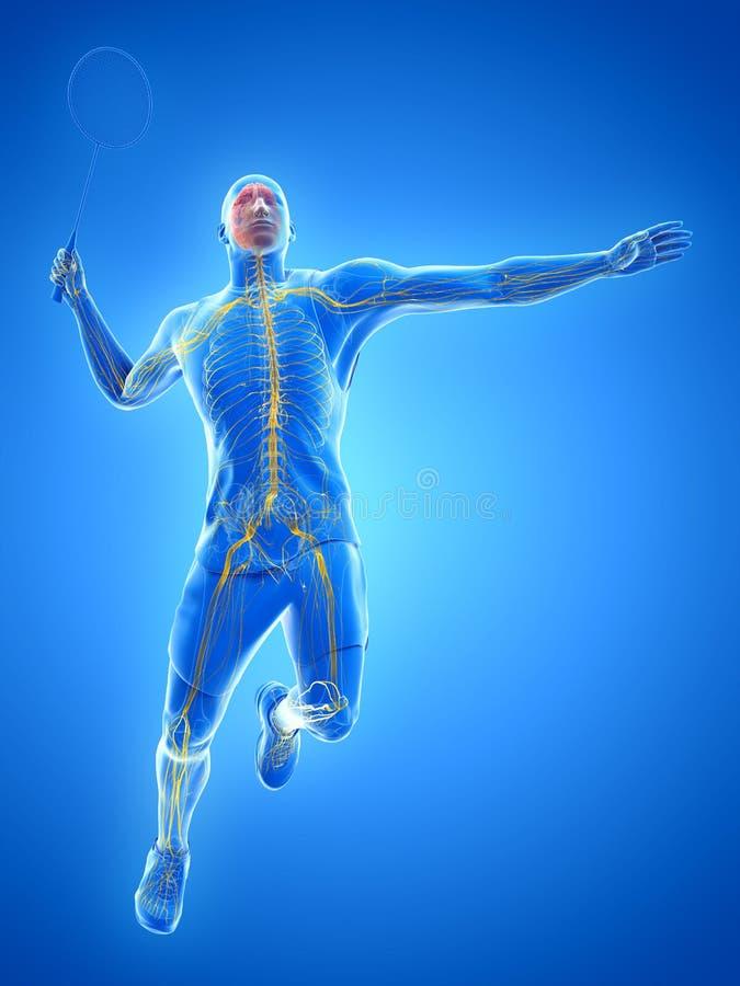 羽毛球球员的神经系统 向量例证